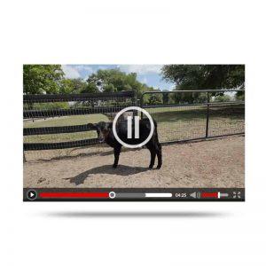 megans-farm-video